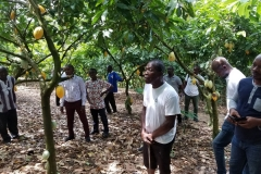 Sustainable-Cocoa