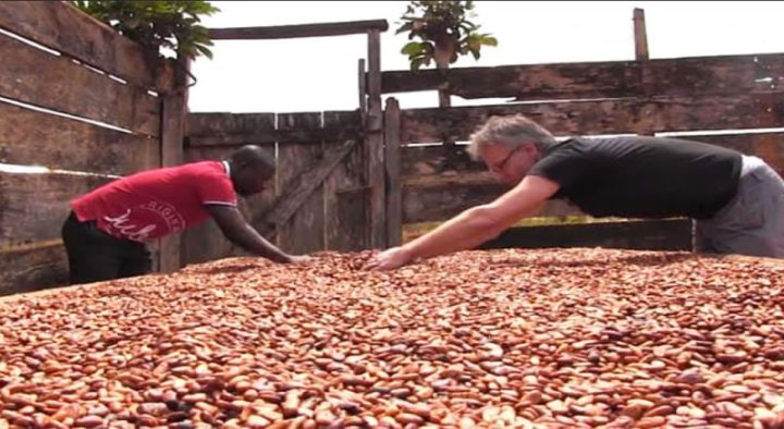 Conservation Alliance and Rainforest Alliance/UTZ Promote the Adoption of Integrated Pest Management in Cocoa Production.
