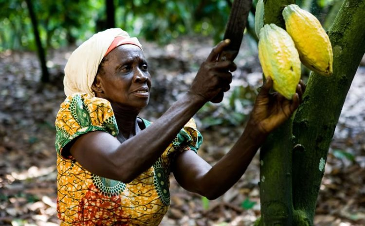 BOAME: Empowering Women and Sustaining Nature.